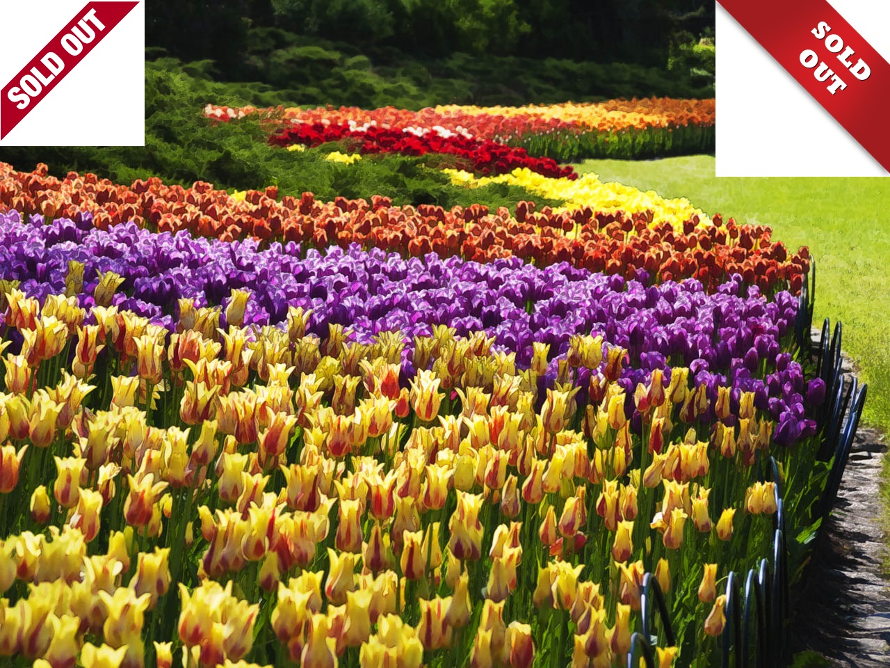 Canadian Tulip Festival Tour - Ottawa (May 20 & 21) SOLD OUT