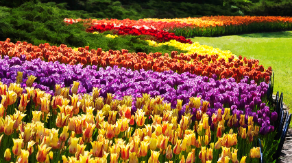 Canadian Tulip Festival Tour - Ottawa (May 18 & 19, 2019)